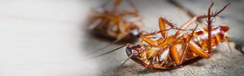 Profesyonel Böcek & Haşere Kontrolü
